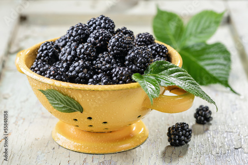 Blackberry with leaves and water drops