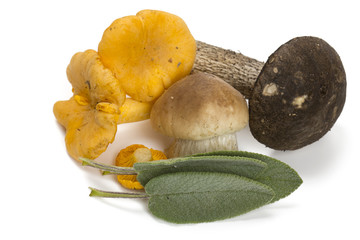 edible mushrooms and sage