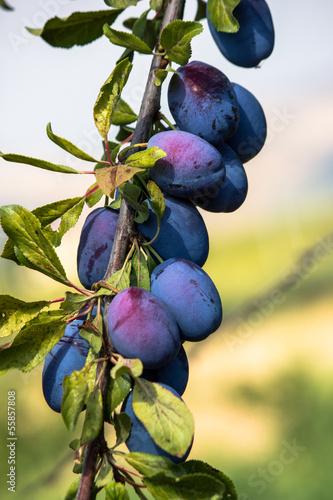 albero di progne