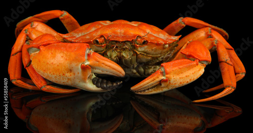 Boiled crab isolated on black