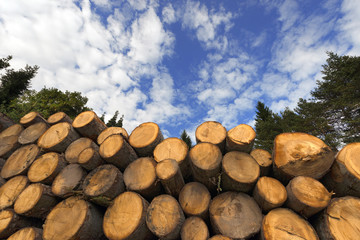 Wooden Logs with Blue Sky on Background