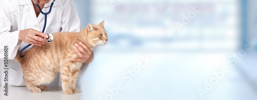 Ginger cat with veterinarian doctor. © Kurhan