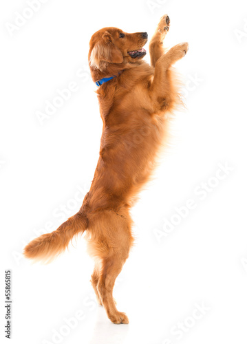 Cute dog jumping