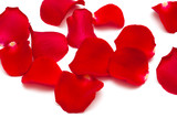 red rose petals background