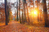 Fototapety Sunset in the autumn forest