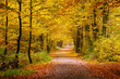 canvas print picture - Autumn forest
