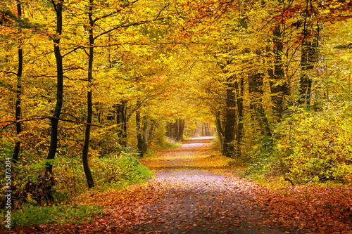 Papiers peints Forets Autumn forest
