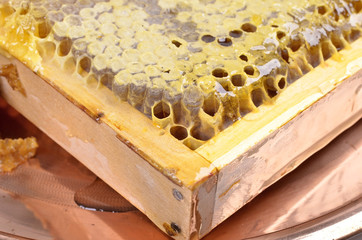 fresh honeycombs with honey