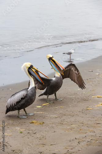 Pelicans on Ballestas Islands in Paracas.Peru.South America