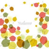 秋 落ち葉 Flying autumn leaves background with space for text