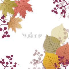 秋 紅葉 コピースペース Seasonal Background with autumn leaves and berries