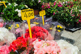 Begonia plants for sale with price tag in a street market