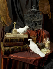 two white pigeons among vintage books
