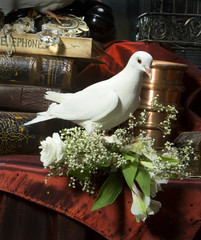 white pigeons in a vintage still life