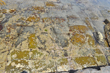 The Tessellated Pavement, natural phenomenon in Tasmania.