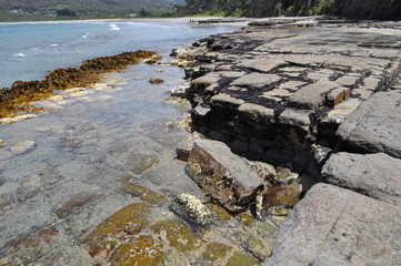 The Tessellated Pavement, natural phenomenon in Tasmania. Landsc