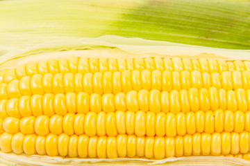 corn isolated on a white background