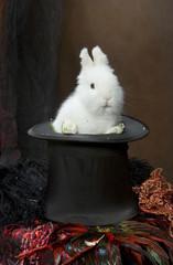 coelho no cilindro do conjurador