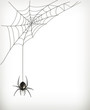 Spider web - 55905051