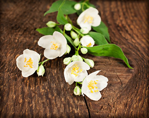 blooming jasmine on wooden background