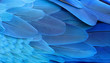 Blue and gold macaw feathers. - 55905865