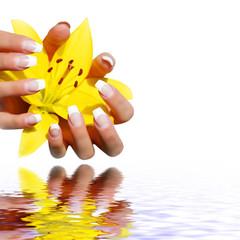 gelbe Lilie mit Spiegelung