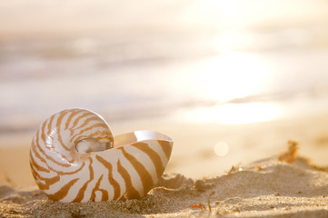nautilus shell on beach, sunrise and  tropical sea
