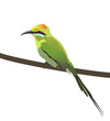 An illustration of colorful Green bee eater