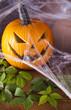 Halloween pumpkin Jack, spider web