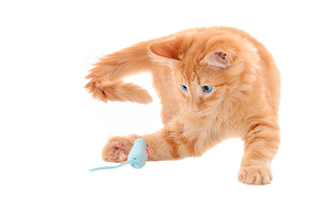 Orange Kitten Playing with Toy Mouse