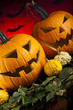 Halloween background with pumpkins in the Grass Bats
