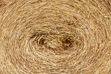 closeup of a circular straw bale for background