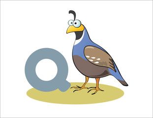 Cartoon Quail and letter Q