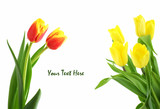 red and yellow tulips isolated on white