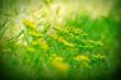 Wild meadow flowers - yellow flowers