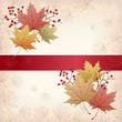 紅葉 もみじ バックグラウンド Autumn Maple leaves background