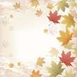 もみじ 和柄 バックグラウンド Autumn Maple leaves background