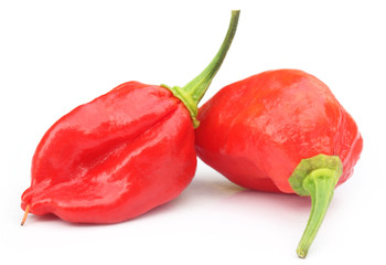 Bhut Jolokia chili pepper or the Naga Morich of Bangladesh