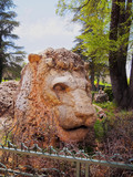 Lion of Ifrane, Morocco