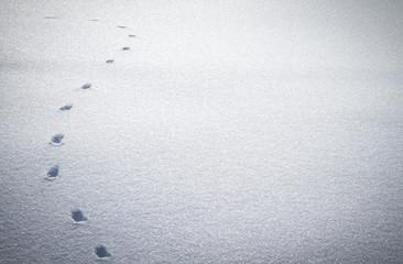 Fußspur eines Tieres im Schnee