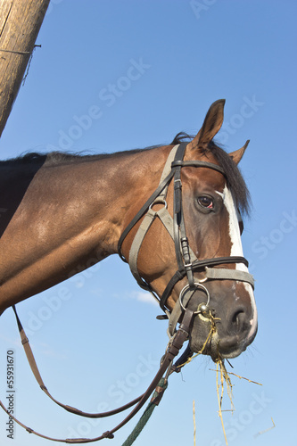 Horse head over blue sky