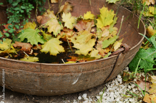 Vintage rusty bowl with yellow maple leaves