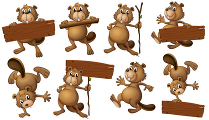 A group of playful beavers with empty signboards