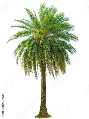 Fotobehang Palm boom Palm tree isolated on white background
