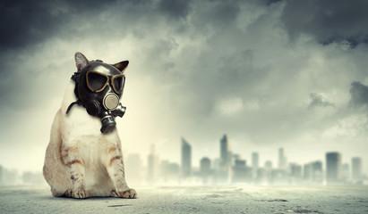 Cat in gas mask