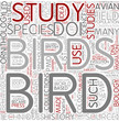 Ornithology Word Cloud Concept