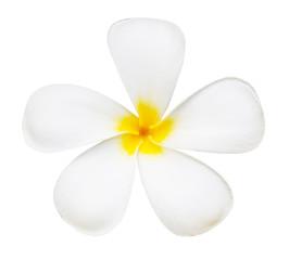 White flower of temple