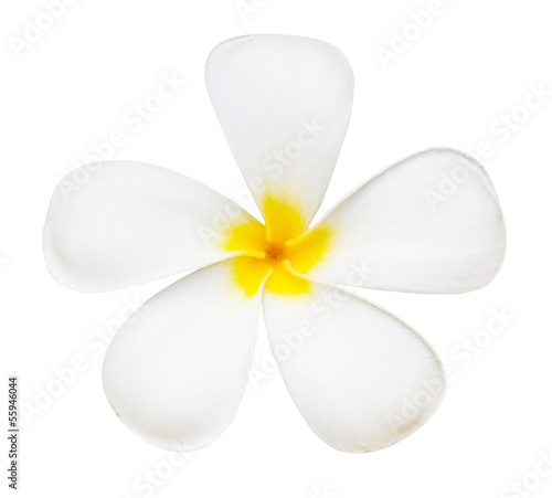 White flower of temple