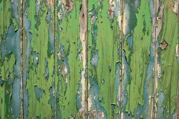 Green and blue peeling paint old fence.