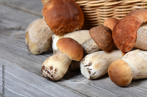The raw boletus edulis a background